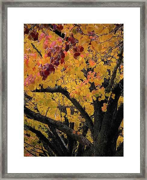 Fall In Carlyle Framed Print