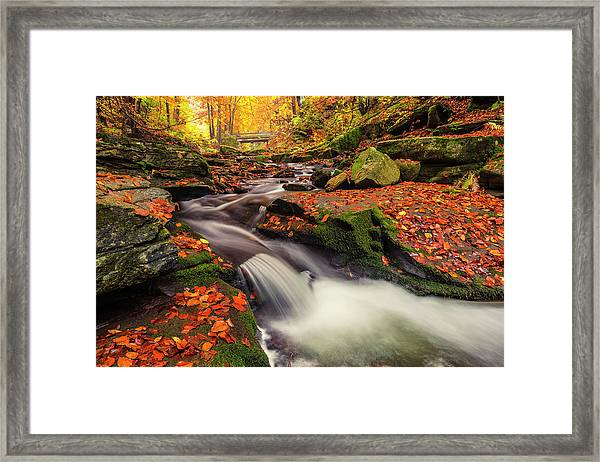 Fall Power Framed Print