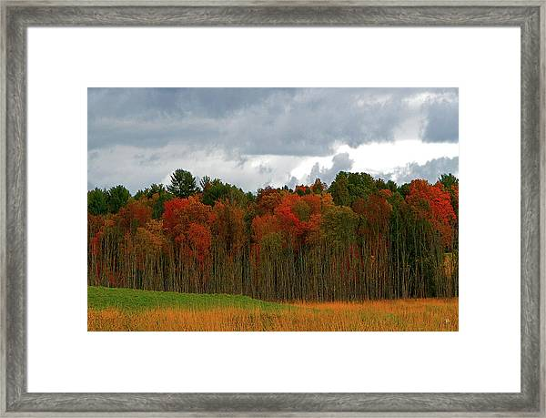 Fall Trees Off Rte 23a Framed Print