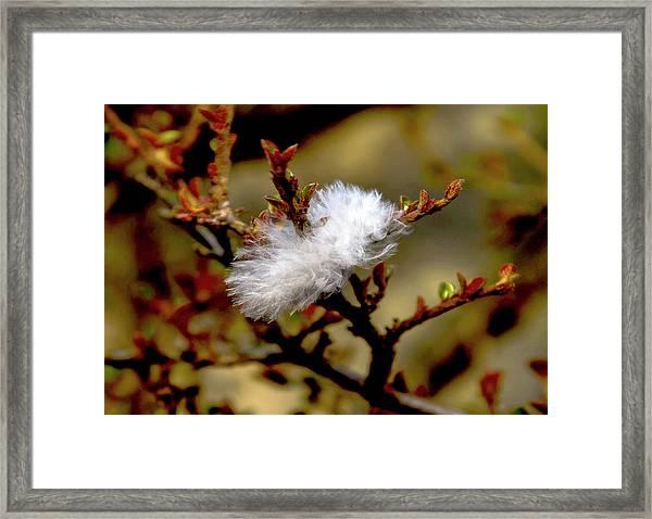 Fallen Feather Framed Print
