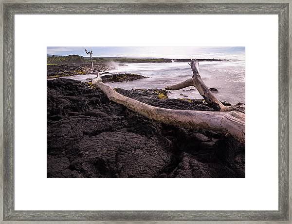 Fallen Tree At Punalu'u Beach Framed Print