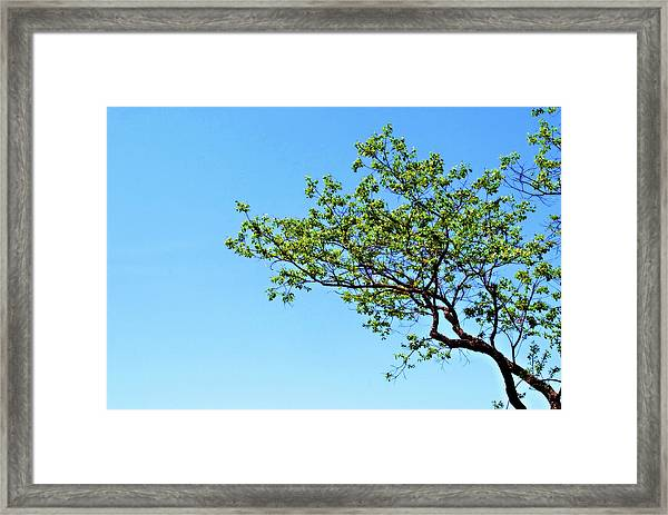 Far Reaching Framed Print
