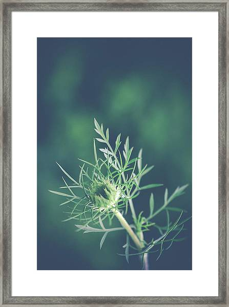 Fascinate Framed Print