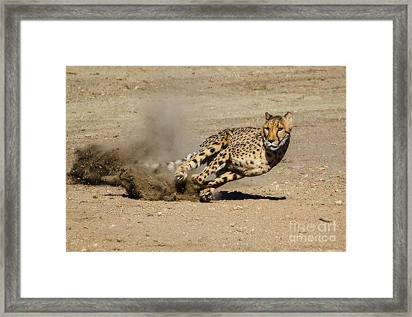 Fast And Nimble Framed Print
