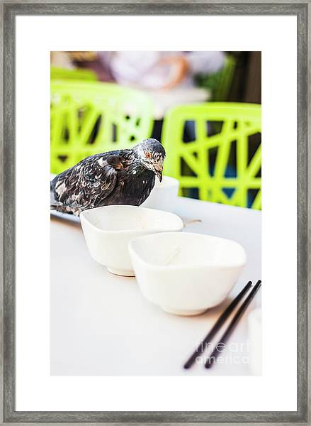 Fast Food Asian Pigeon Framed Print