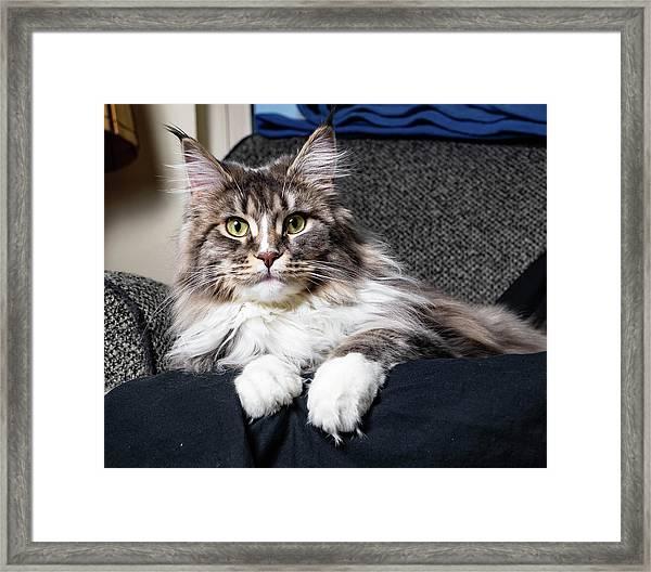 Feline Beauty Framed Print