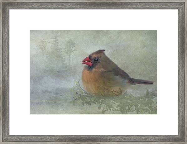 Framed Print featuring the photograph Female Cardinal With Seed by Patti Deters