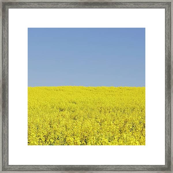 Field Of Blooming Mustard Seed Plants Framed Print