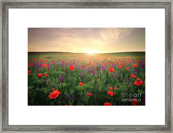 Field With Grass, Violet Flowers And Framed Print