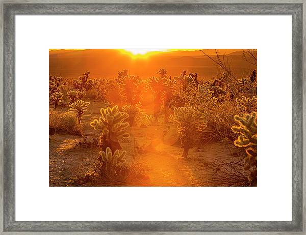 Fiery Sunrise Among The Cacti Framed Print