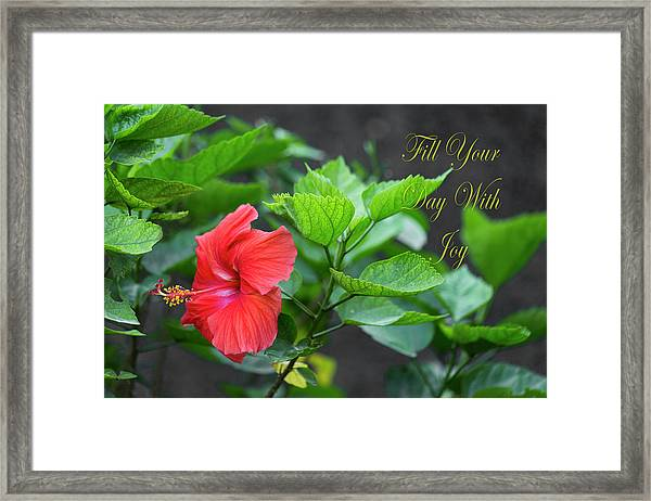 Fill Your Day With Joy Framed Print