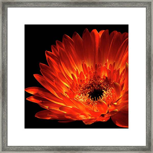 Fire In The Shade Framed Print