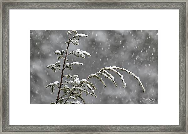 Framed Print featuring the photograph First Snow by David A Lane