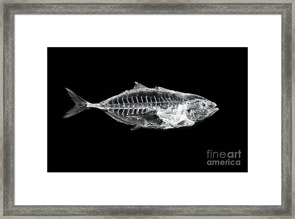Fish X Ray Framed Print