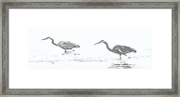Fishing Blue Herons Framed Print