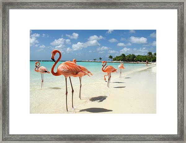 Flamingos On The Beach Framed Print by Vanwyckexpress