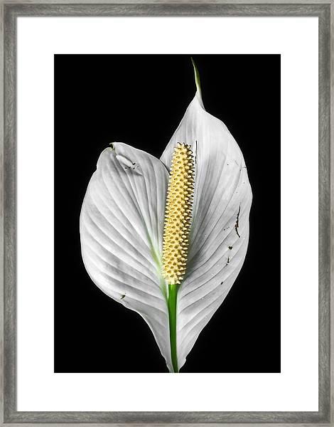 Flawed Beauty Framed Print