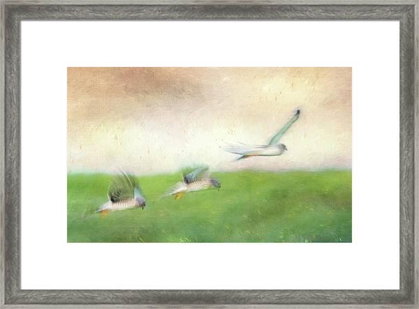 Flight Of The Harrier Framed Print