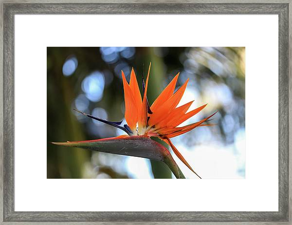 Flight To Paradise Framed Print