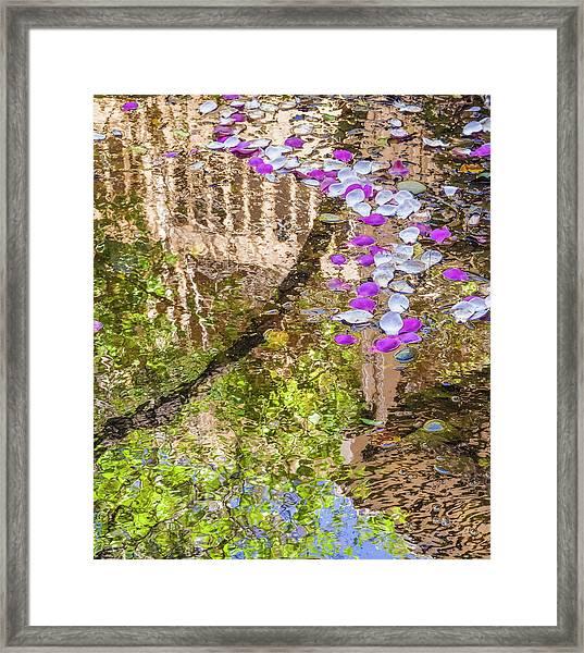 Floating Magnolia Petals Framed Print