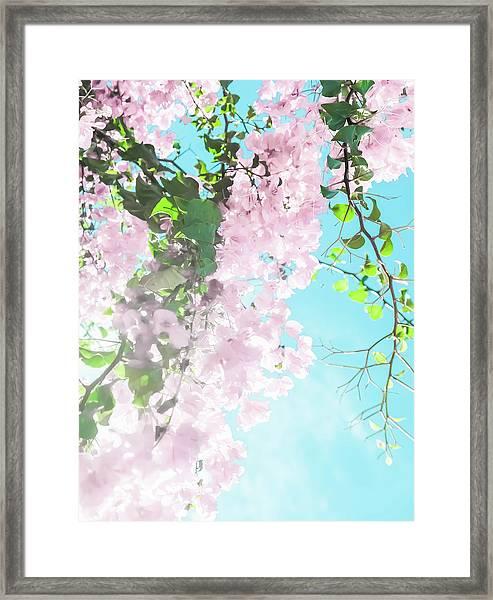 Floral Dreams IIi Framed Print