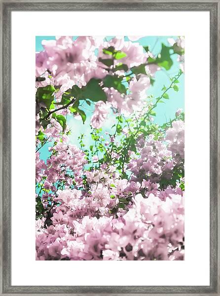 Floral Dreams Iv Framed Print