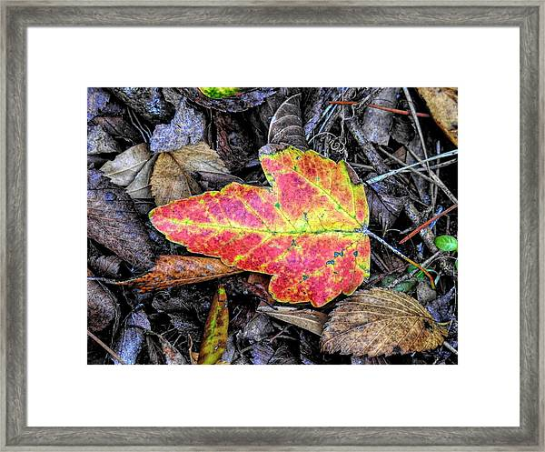 Florida Foliage Framed Print