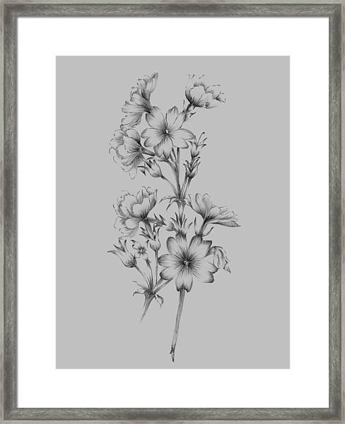 Flower Drawing II Framed Print