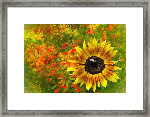 Flower Explosion Framed Print