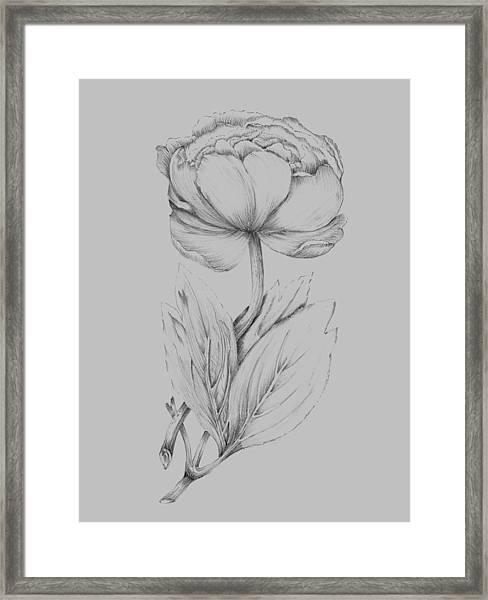 Flower Illustration I Framed Print