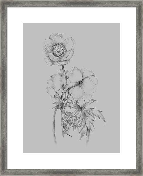 Flower Illustration II Framed Print
