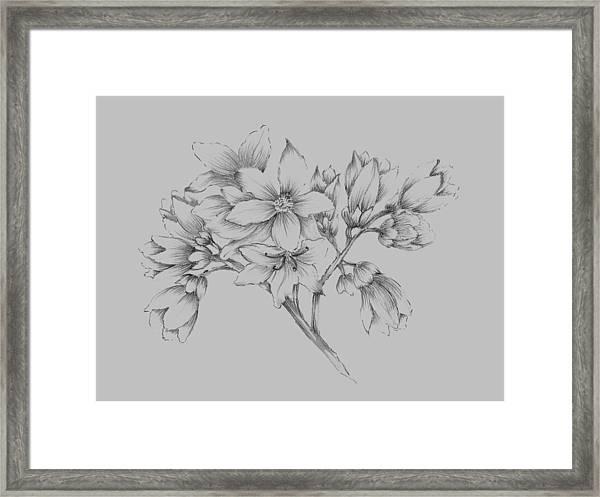 Flower Illustration Framed Print