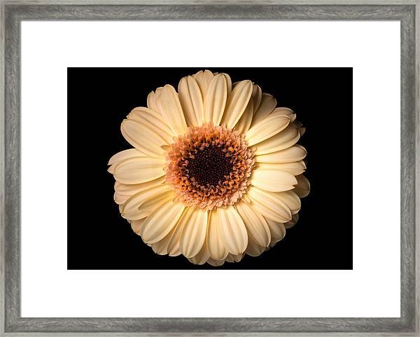 Flower Over Black Framed Print