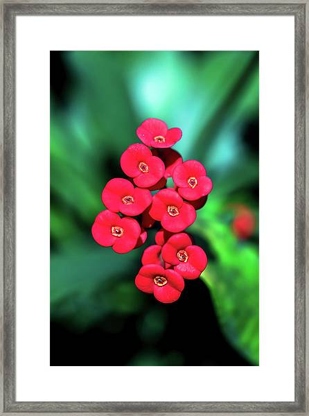 Flower Parade Framed Print