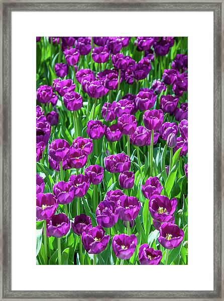 Flower Patterns Collection Set 02 Framed Print by Az Jackson