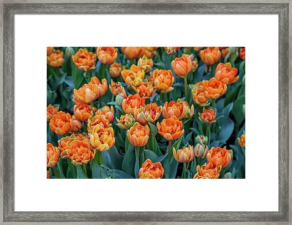 Flower Patterns Collection Set 05 Framed Print by Az Jackson