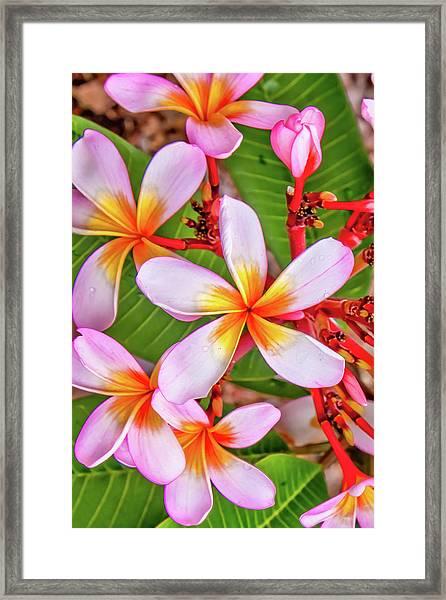 Flower Patterns Collection Set 06 Framed Print by Az Jackson