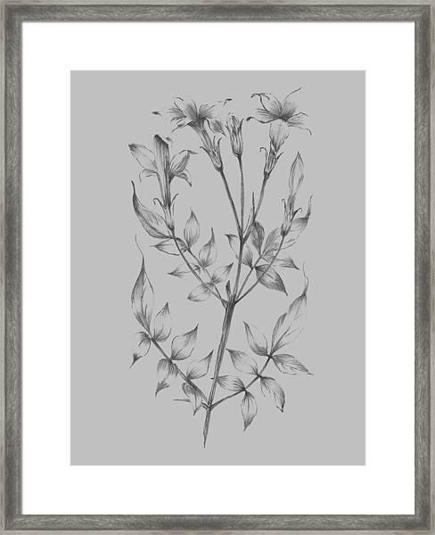 Flower Sketch II Framed Print