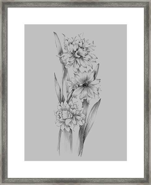 Flower Sketch IIi Framed Print