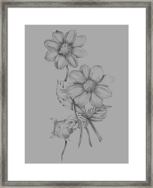 Flower Sketch Framed Print