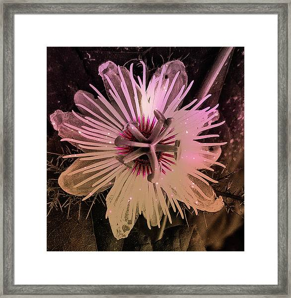 Flower With Tentacles Framed Print