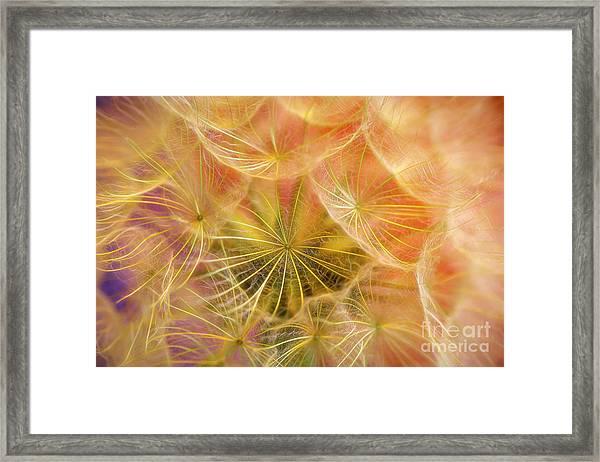 Flowering Over 2 Framed Print