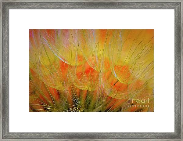 Flowering Over Framed Print