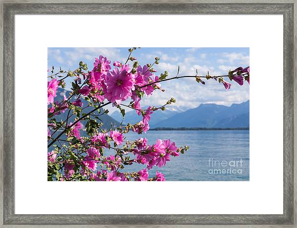 Flowers Against Mountains And Lake Framed Print