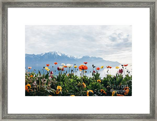 Flowers By The Lake In Montreux Framed Print