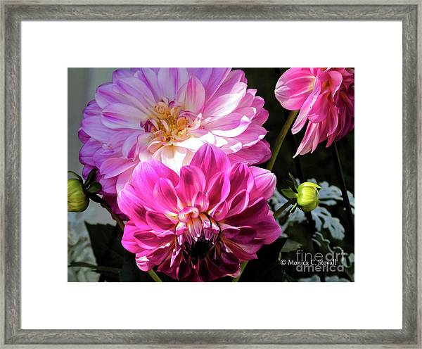 Flowers Hanging No. Hgf14 Framed Print