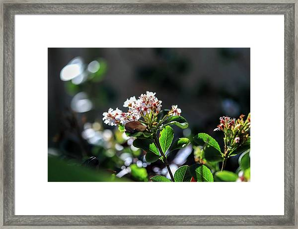 Beautiful Blooms Framed Print