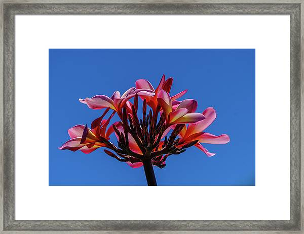 Flowers In Clear Blue Sky Framed Print