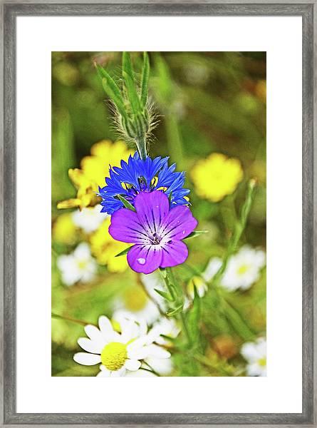Flowers In The Meadow. Framed Print