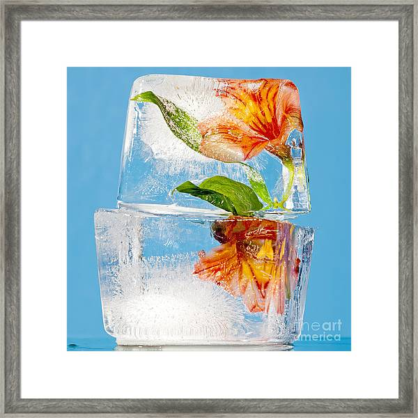 Flowers Trapped In A Block Of Ice Framed Print